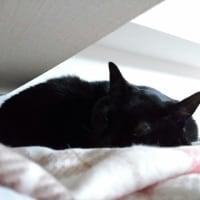 ぺたんこ妹猫