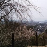 奈良ポタリング2