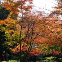 太田黒公園の紅葉 その2