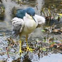 舞鶴公園周辺(野鳥)