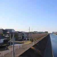 2017年2月桜