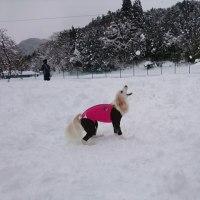 wan-waで 雪に埋もれてきましたぁ(≧∀≦)