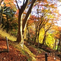 比叡山麓の紅葉 今年は早足で