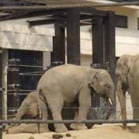 行楽日和。動物園へ♪