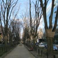 午前中の定禅寺通りを歩く