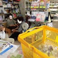 聖徳太子と養蚕~ 相模原市(津久井)青野原の天蚕にビックリ