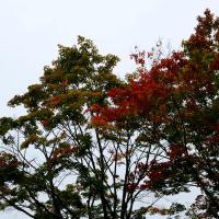 今日は曇りでした