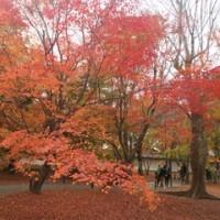 美しい朝 秋の色