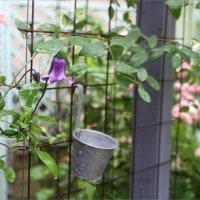 雨の日の庭もいい。鳩の巣立ち。