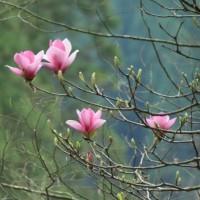 3月23日(木)の聖言