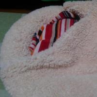 珊瑚のベッド
