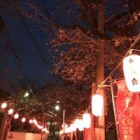 桜ラテ Sakura Latte