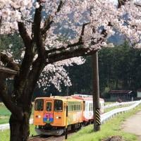 桜の樽見鉄道 高科駅(岐阜県)