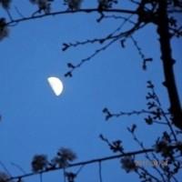 満月 月齢14(今月はあいにく観えなかった)