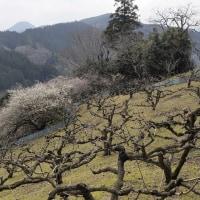 里山の春・奈良県西吉野