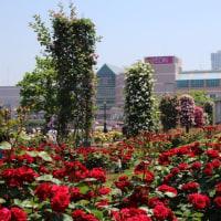 ベルニー 公園 バラ祭り 続きます