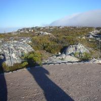 「東南アフリカ」編 ケープタウン8 テーブルマウンテン2
