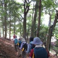 吹田市民登山「能勢・妙見山・ブナ林」を歩きました