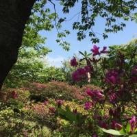 三浦半島の武山へ