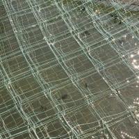 海苔網の今