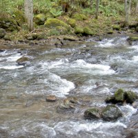 M川本流、良型ニジマスヒット。オショロコマ、ゼロ   北見市近郊M川支流のニジマスとオショロコマの力関係  3