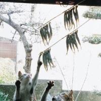 【グロ注意】死体をむさぼる野獣の群れ(猫が干物を狙う 可愛い)
