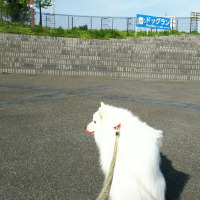 ツインメッセ静岡に集まったお仲間たち(DOG!フェスタ@ツインメッセ静岡その1)