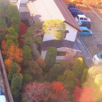 ある庭の紅葉
