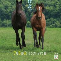 【八戸市場2016(Hachinohe Sale、1歳)】の「測尺一覧表」が公開!