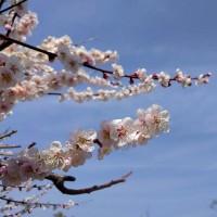 春分の日…。