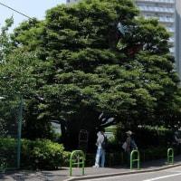 「高輪歴史探訪 ~坂と寺社を訪ねて~」がJR東日本のウォーキングイベントに