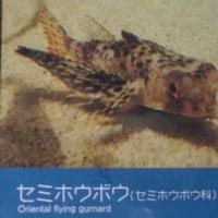 9/26(月) 九十九島 水族館「海きらら」