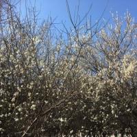 春一番!!~春間近?