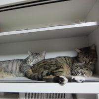熟睡な兄弟