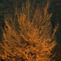 岩国城の秋