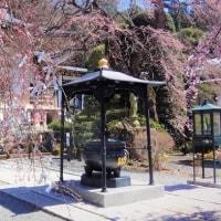 真田の郷の桜