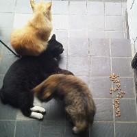 猫密度高し(=^・^=)