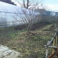 我が農園は…いよいよ休耕です