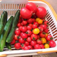 おもしろい形のトマト