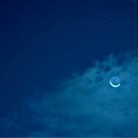 27/Oct 名残の月と地球照と朝陽の差し込むアベリアとニャンズとアブさん