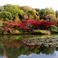東山動植物園の紅葉