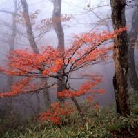 小田深山の紅葉はやっと見頃