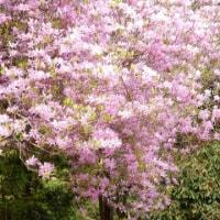 高尾山の花