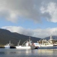 今漁期の漁獲は69,000トン  アイスランド