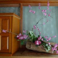 やっと開花の乙女桜と今週の献華。