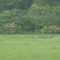 6月22日「癒しのブナ林を歩いて、長沼へ行こう(1)新緑のブナ林を歩こう」開催しました