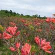 梅雨に入る前のお花見(4)
