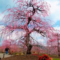 樹木が主役の写真ー9