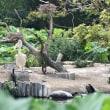 蓮からみる蝶とペリカン!上野動物園~ ルギアも!