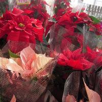 花屋 冬の花材